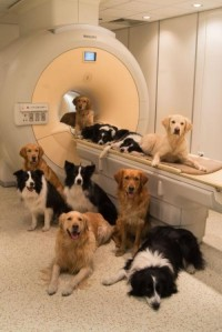 Собаки, участвующие в исследовании
