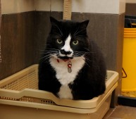 Mike uses the litter tray
