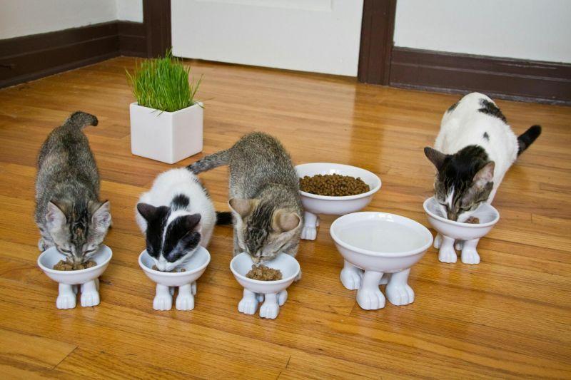 5651a3a22a1b2_all-cat-10
