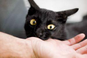 cat-biting