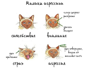cat_mimika