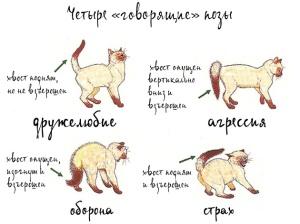 cat_pose_3