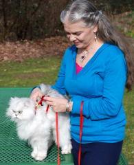 cats-leash-2