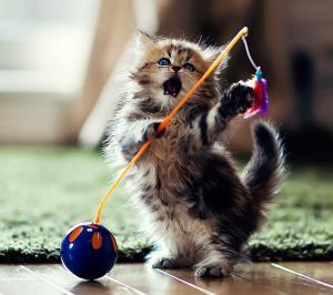 daisy-kitten-4