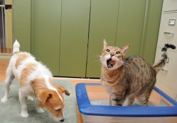 dog-bothering-cat-in-litter-box