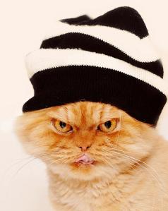 funny-cats-phtos-21