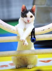 gal-cat-show-3-jpg