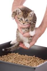 apprentissage d'un chaton de 7 semaines à la propreté