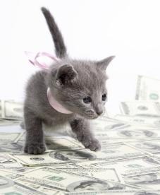 kitten-with-money - копия