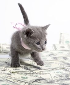 kitten-with-money - копия
