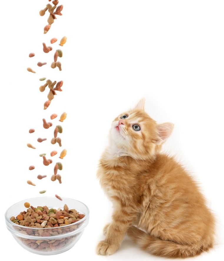 Kitten%20and%20dry%20food%20shutterstock_74715544