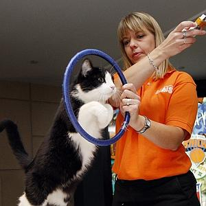 Animal trainer Karen Thomas works with Aoe, a rescued cat jumping through a hoop, at a preview for the CFA-Iams Cat Championship in New York October 15, 2008. The cat show runs through the weekend at Madison Square Garden and includes show cats, trained cats and rescued cats looking for a home. REUTERS/Chip East (UNITED STATES)