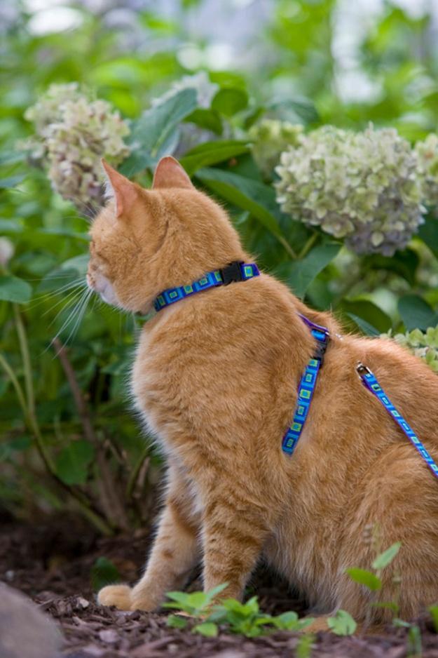 LUP_1-2_cat_harness_lead_model_sea_glass__83652_zoom