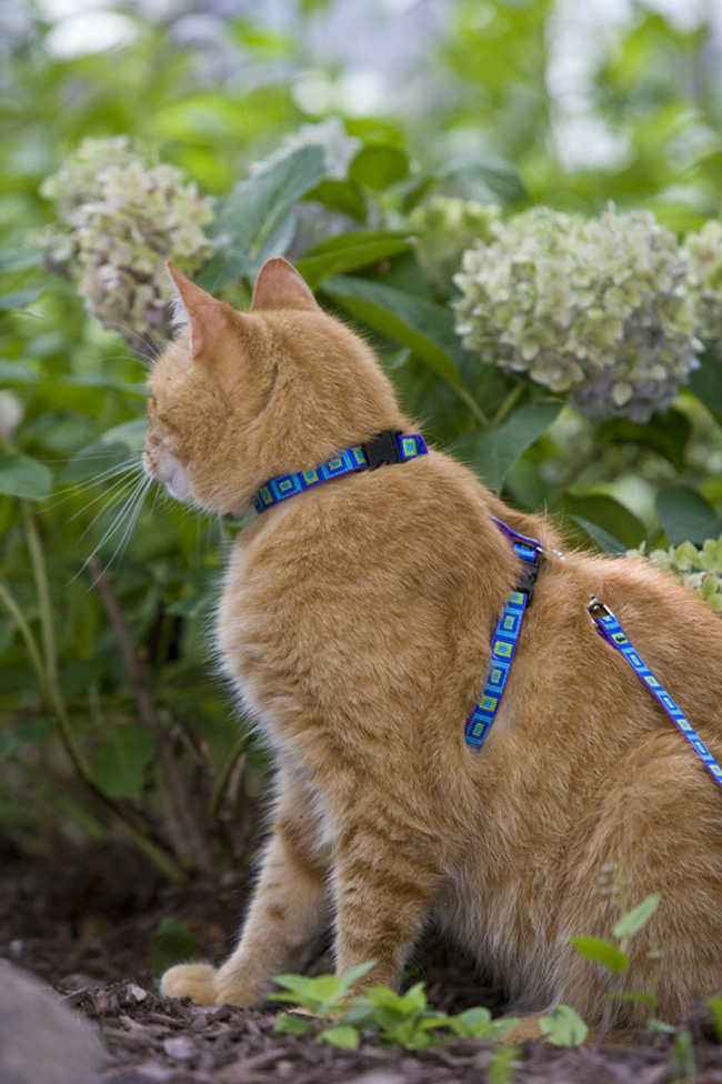 LUP_1-2_cat_harness_lead_model_sea_glass__83652_zoom