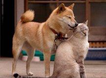 cat-friends-46