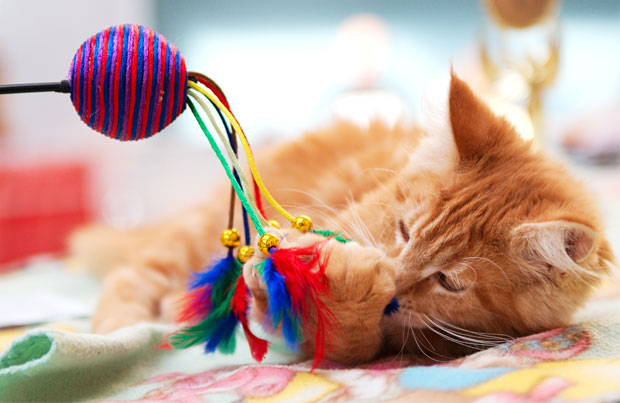 cat_playing_with_toy