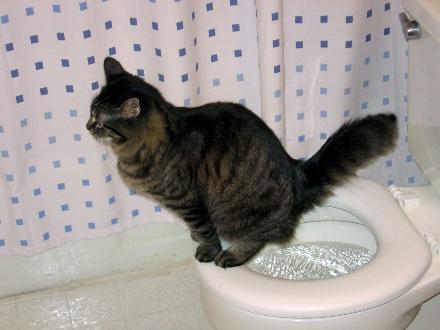 cats-toilet1