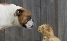 Cats_n_Dogs-300x185