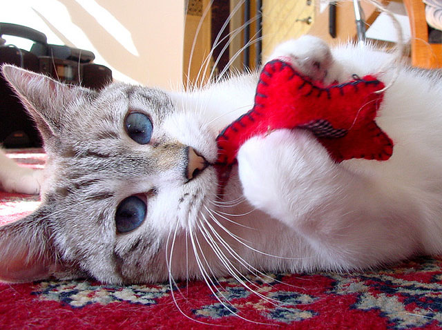 Игрушки-для-кошек-2