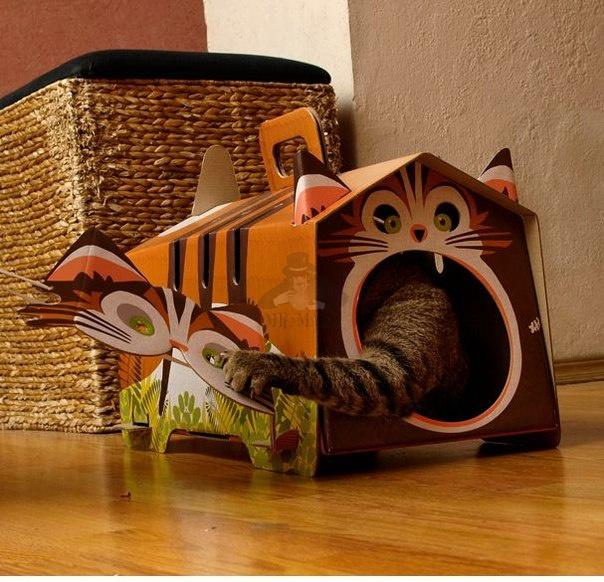 Кошка-играет-в-домике