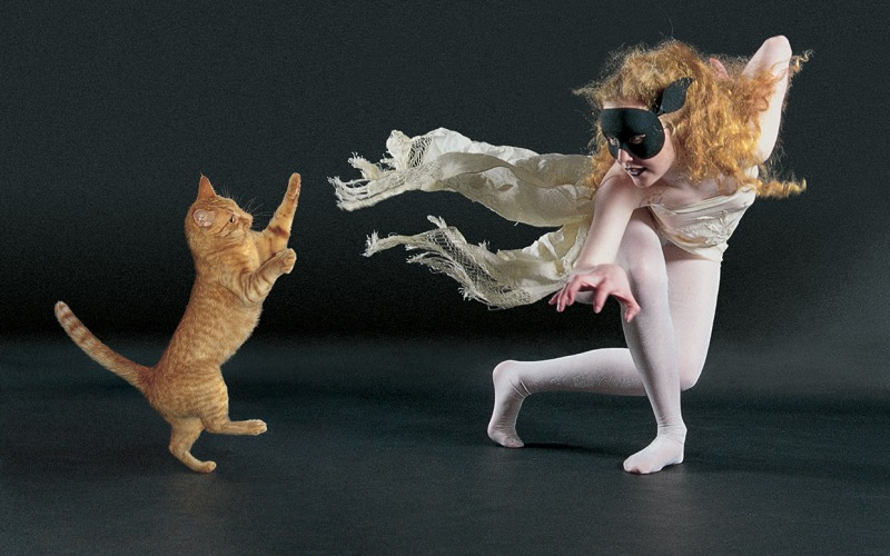 dancing-with-cats-ftr