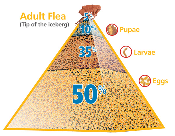 FLP-Pyramid