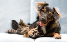 Funny-Cat-And-Dog-Friend-Wallpaper-HD