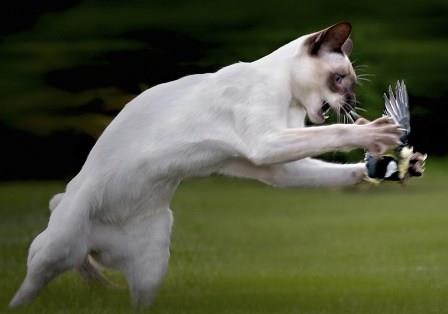Cat-bird-hunting-grass-jumping-aggression