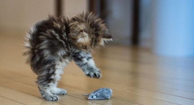 игра для котят