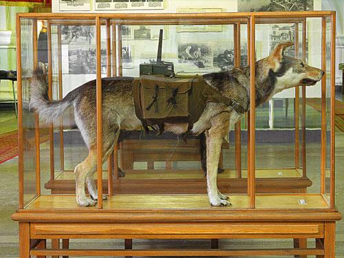 Собака-истребитель