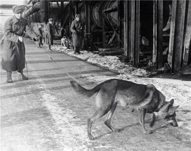 Собаки на войне_1