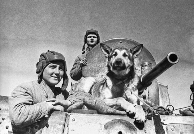 Собаки на войне_2