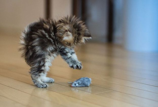 i_stay_positive_with_cute_kitten_009_50b77595673e5