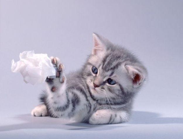 kitties_01