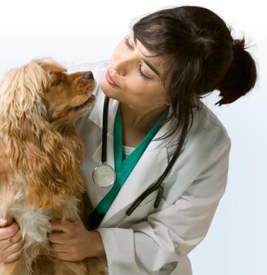 veterinarian-jobs