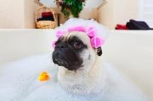 Bathing-Dog