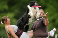 Best-Dogs-Photos-In-The-Air-5