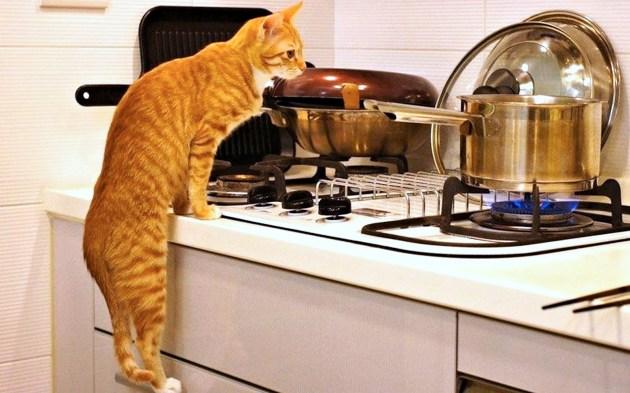 кошка на плите