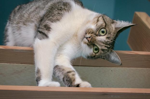 кошка-на-полке