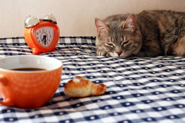 кошка на столе 3
