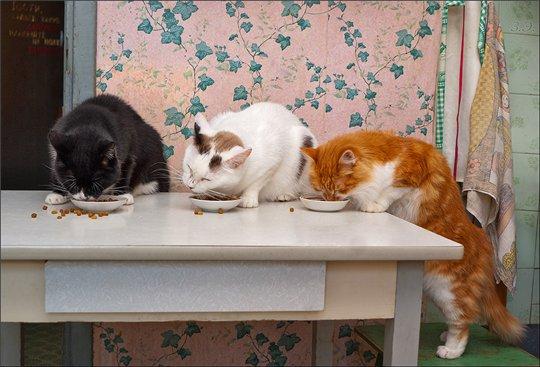 кошка на столе 4