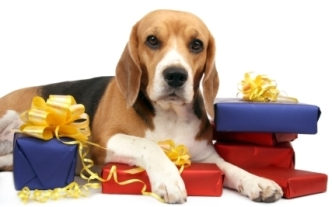 dog_w_gifts
