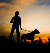 Five-safety-tips-for-dog-walking-at-night_16001188_800916562_0_0_14080152_500