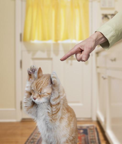 коты царапают кожаные диваны