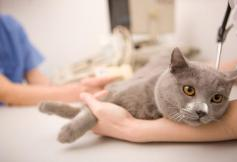cat-at-veterinarian-iStock_000012554908Small