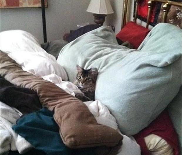 cat-in-bed1