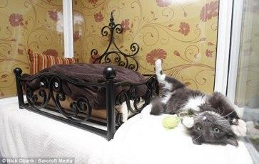Longcroft-Luxury-Cat-Hotel-1