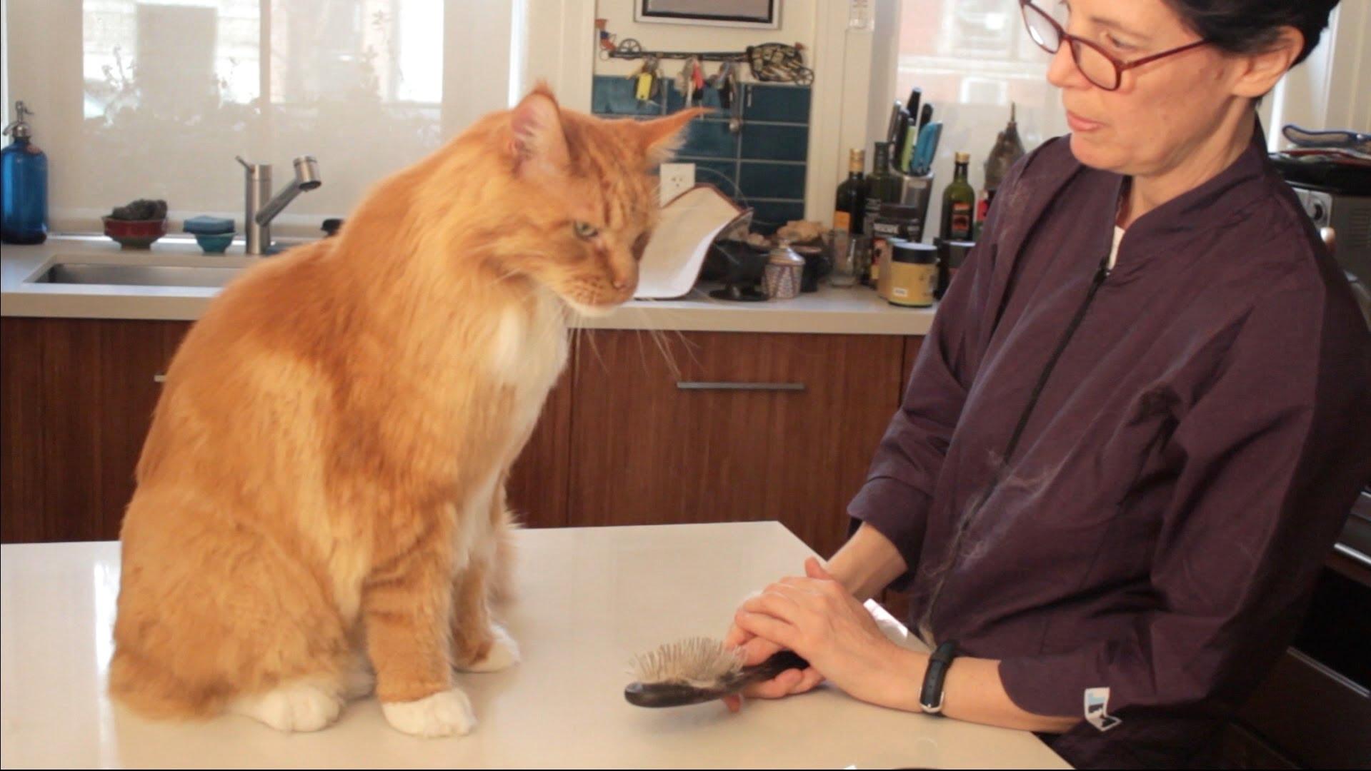 cat grooming mesa az