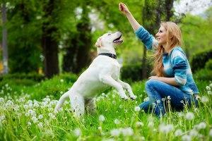 mirror-dog-training1