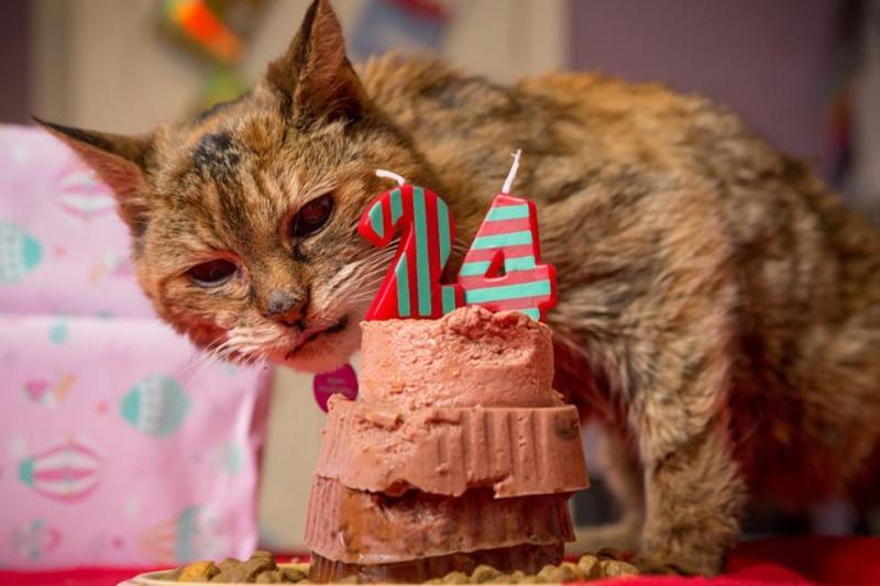oldest-cat-turns-24